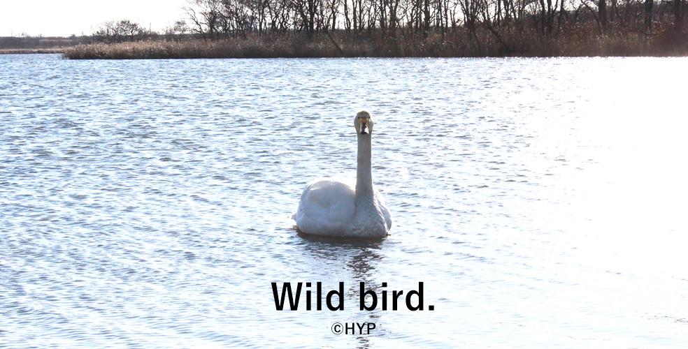 野鳥その1 -ちゃんとした方の写真その02