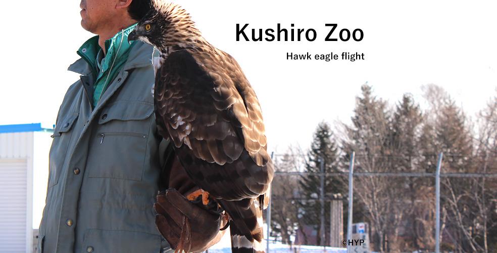 釧路動物園 クマタカフライト2016