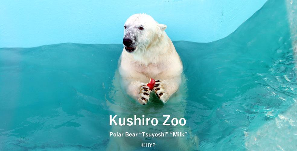 釧路動物園 シロクマのツヨシとミルク
